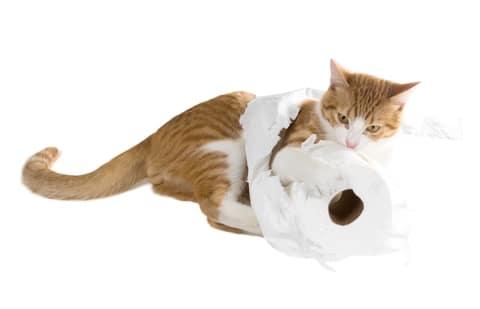 Niet elke kat met diarree heeft kattenziekte
