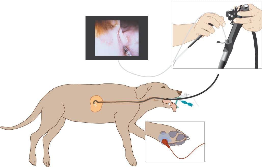 Oorzaken van overgeven bij de hond