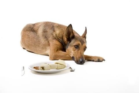 Hond wil niet eten