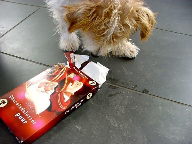 Als een hond iets giftigs heeft gegeten, is het soms verstandig hem te laten braken