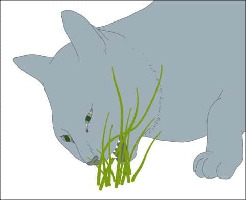 Een misselijke kat eet vaak gras
