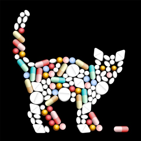 Veel medicijnen voor mensen zijn giftig voor katten