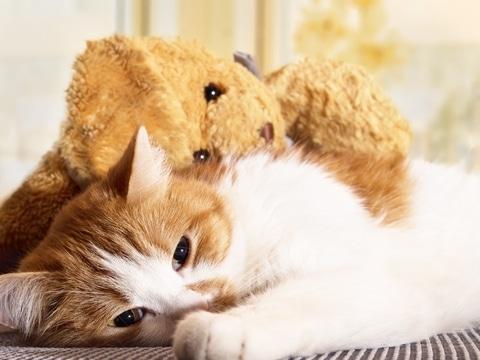 Lusteloze kat wordt omarmd door knuffel