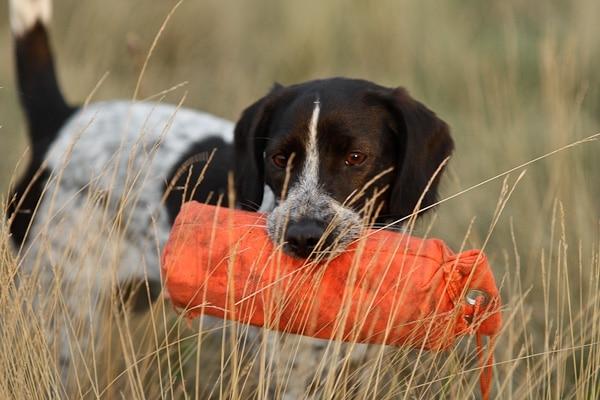 nierfalen hond hersteld