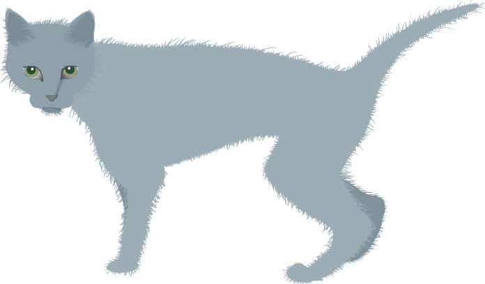Een magere kat door schildklierproblemen